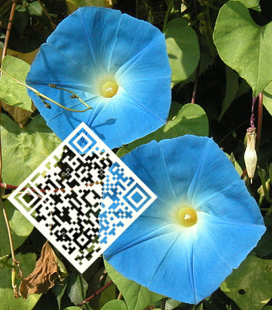 photo QR code Frauen Google+